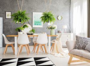 Rośliny doniczkowe- jakie są popularne rośliny w domu?